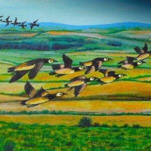 Birds at Maryculter